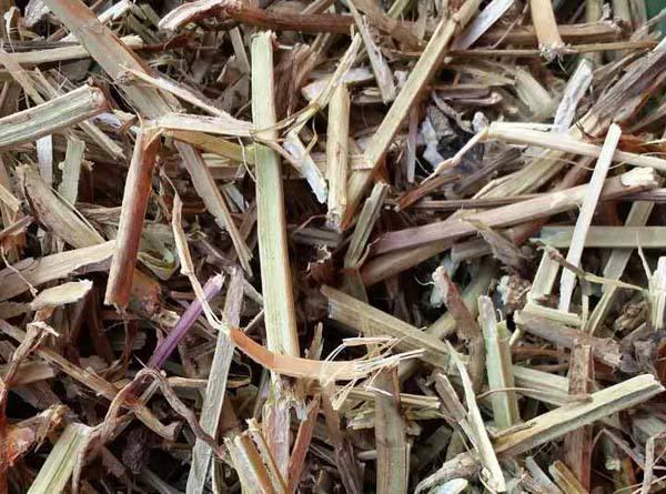 哪里有卖花生秧糠