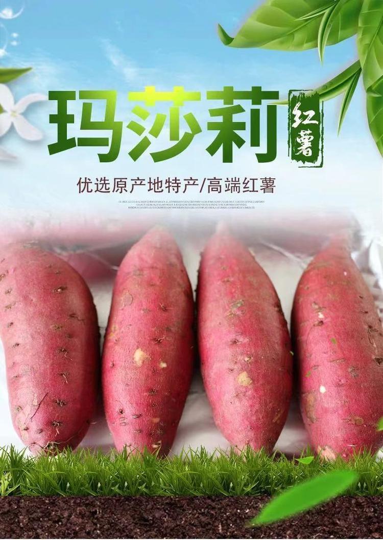 玛莎莉红薯亩产多少斤