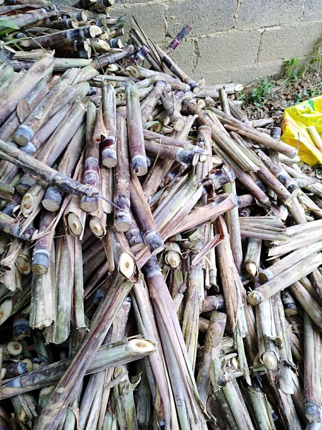 北方甘蔗种子价格