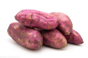 红薯批发基地价格